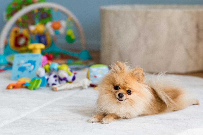 petit chien adorable chez la mariée